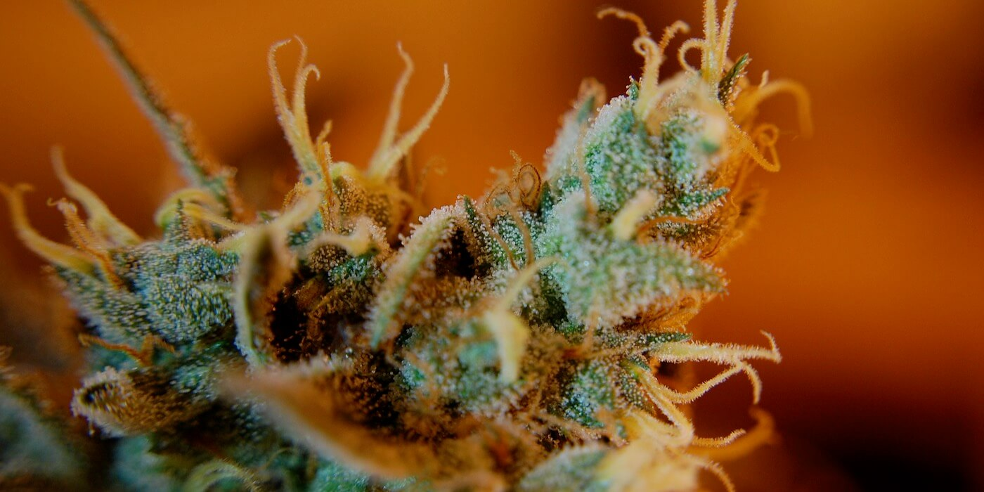 Cannabinoide und Neurogenese