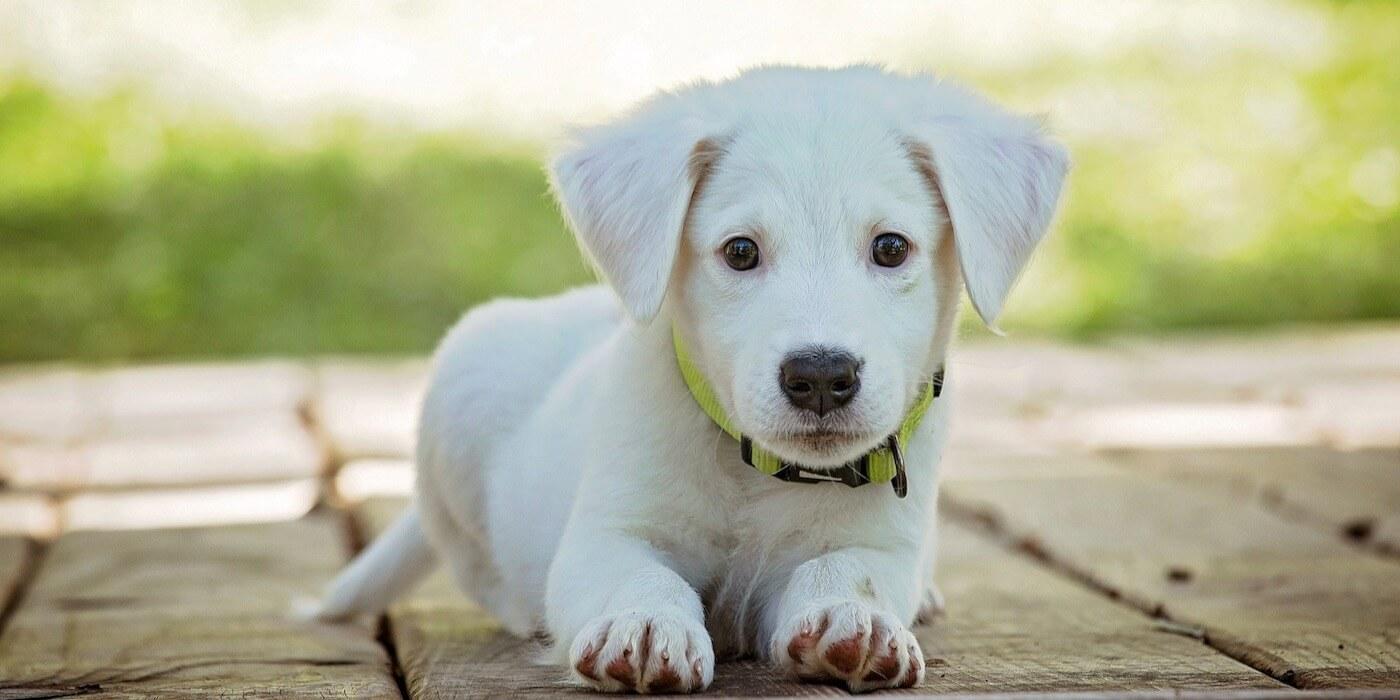 Nahrungsergänzungsmittel und CBD-Snacks für Hunde
