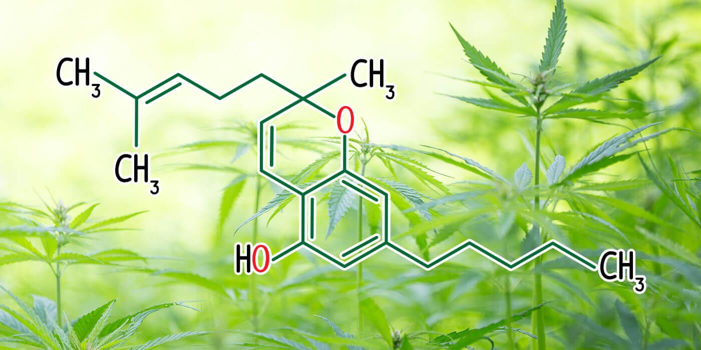 CBC – Ein medizinischer Teamplayer unter den Cannabinoiden