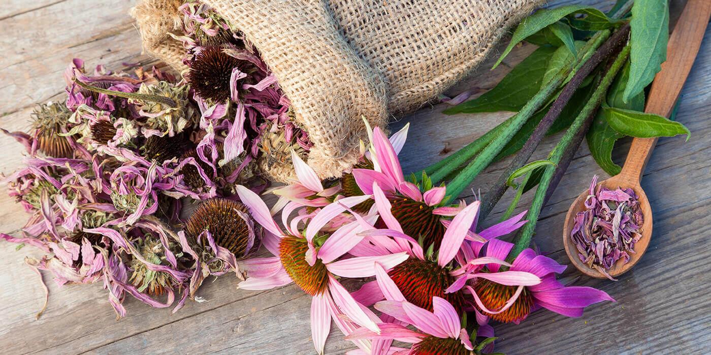 cannabinoide-pflanzen