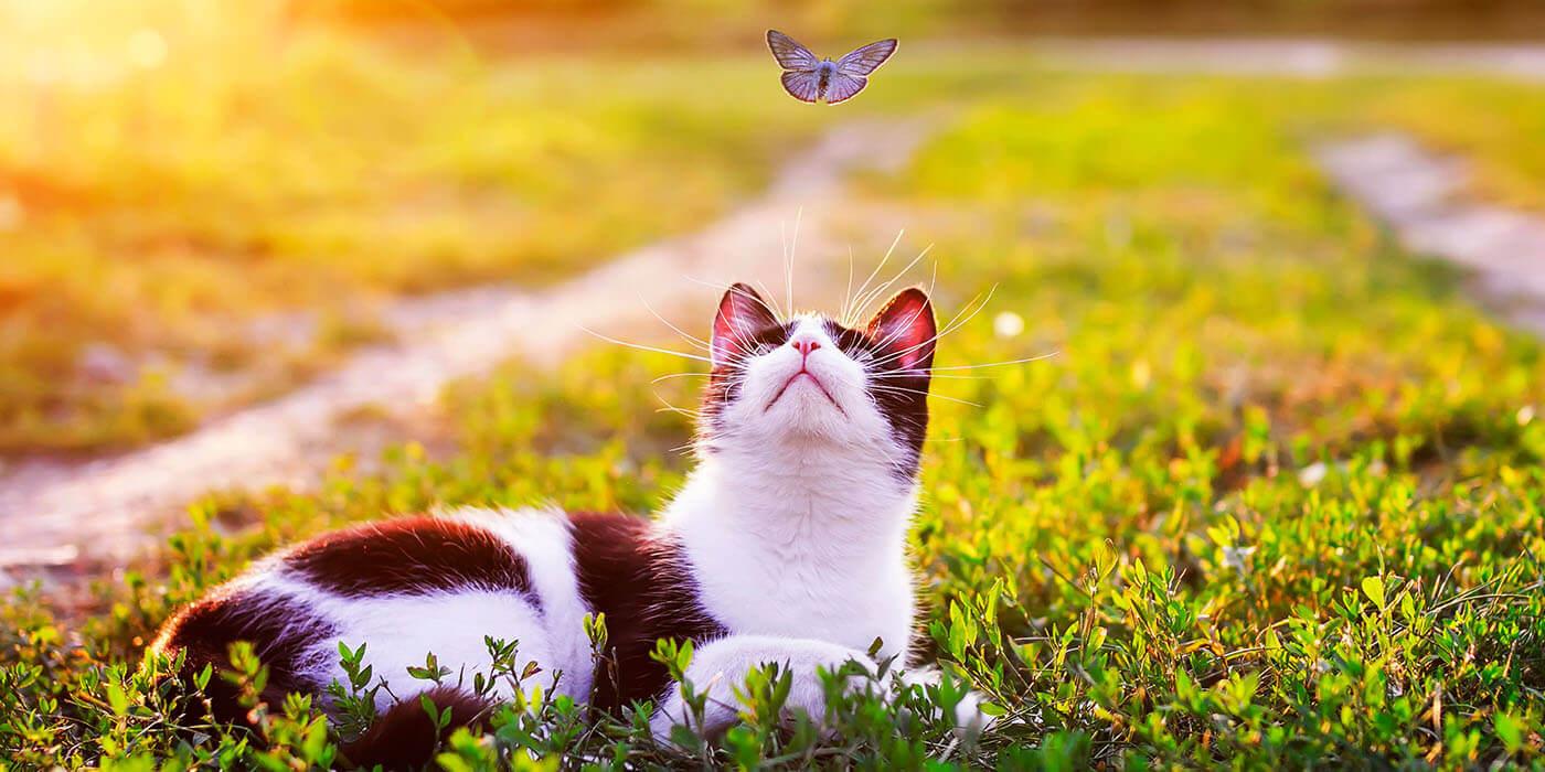 Terpene und Katzen
