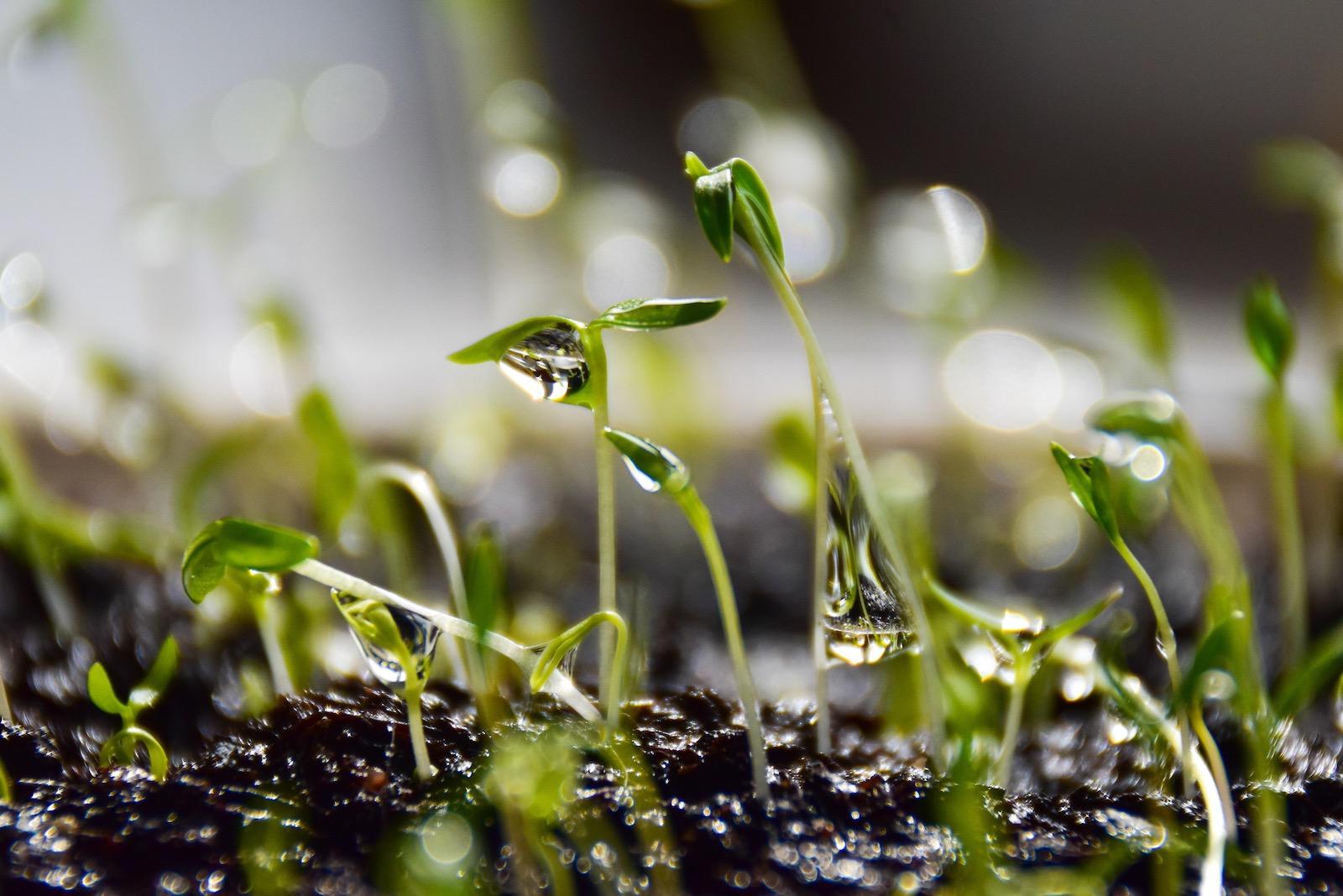 Weshalb man nur biologische Hanfprodukte kaufen sollte