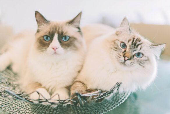CBD für Katzen
